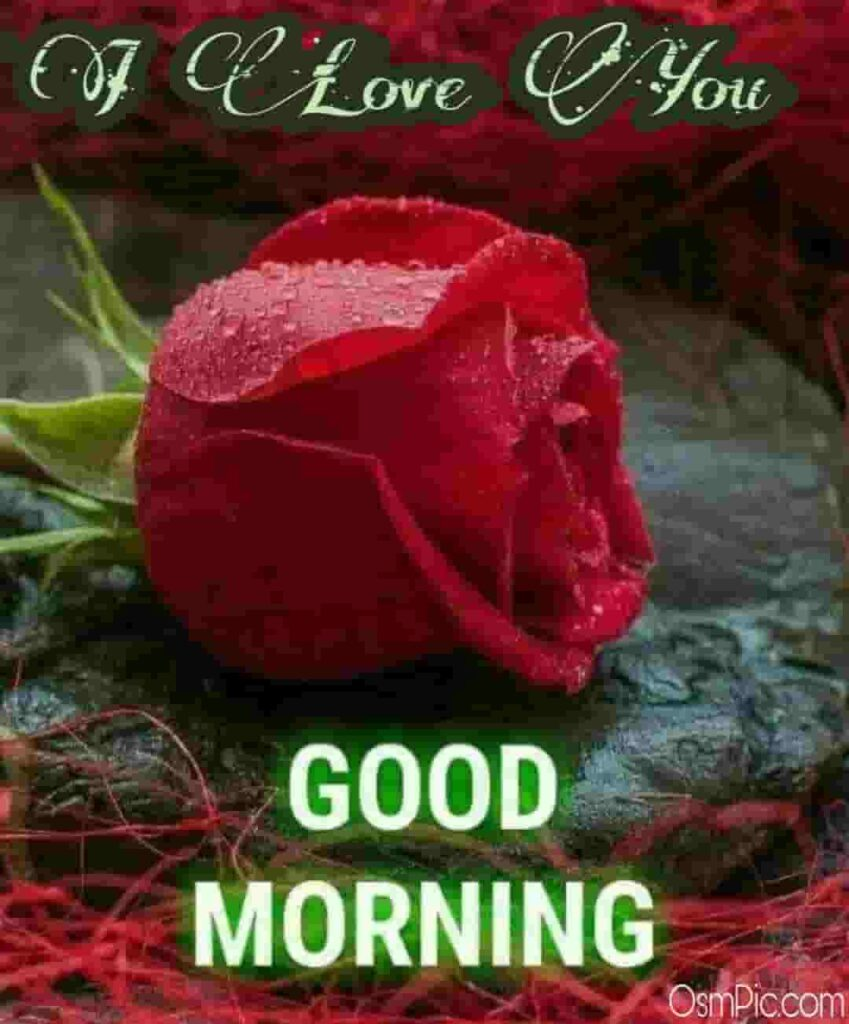 Good morning rose for girlfriend with i love you message