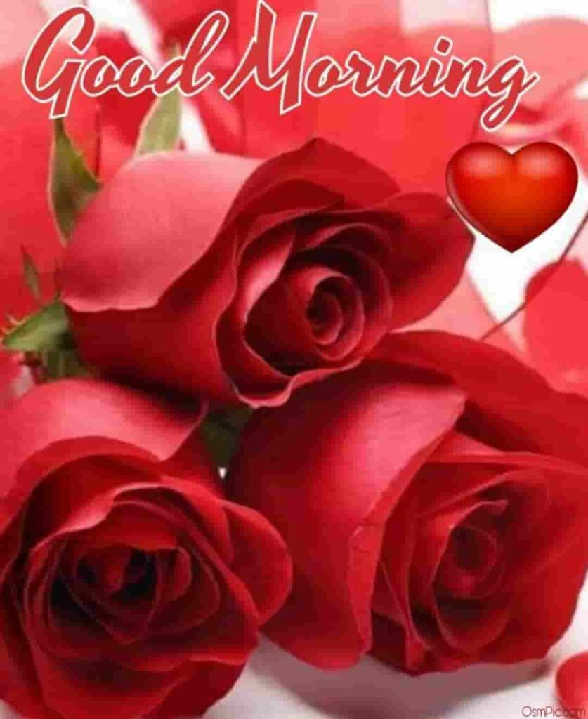 Good morning wishes with beautiful roses free download