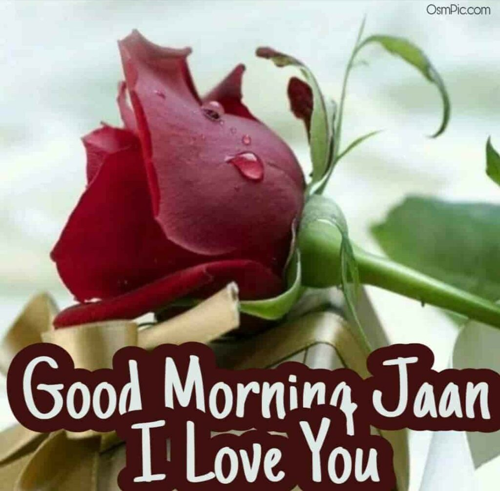 Good morning jaan red rose for jaan to say good morning love