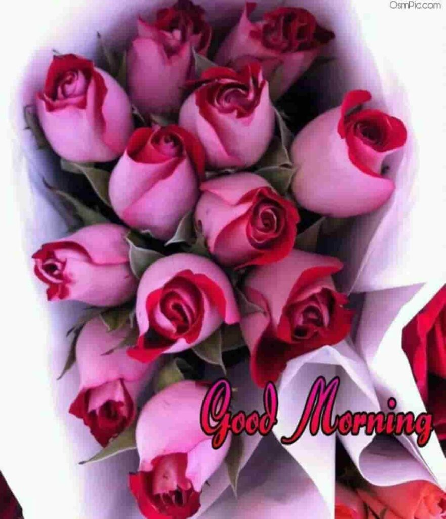 Good morning wishes with beautiful pink roses