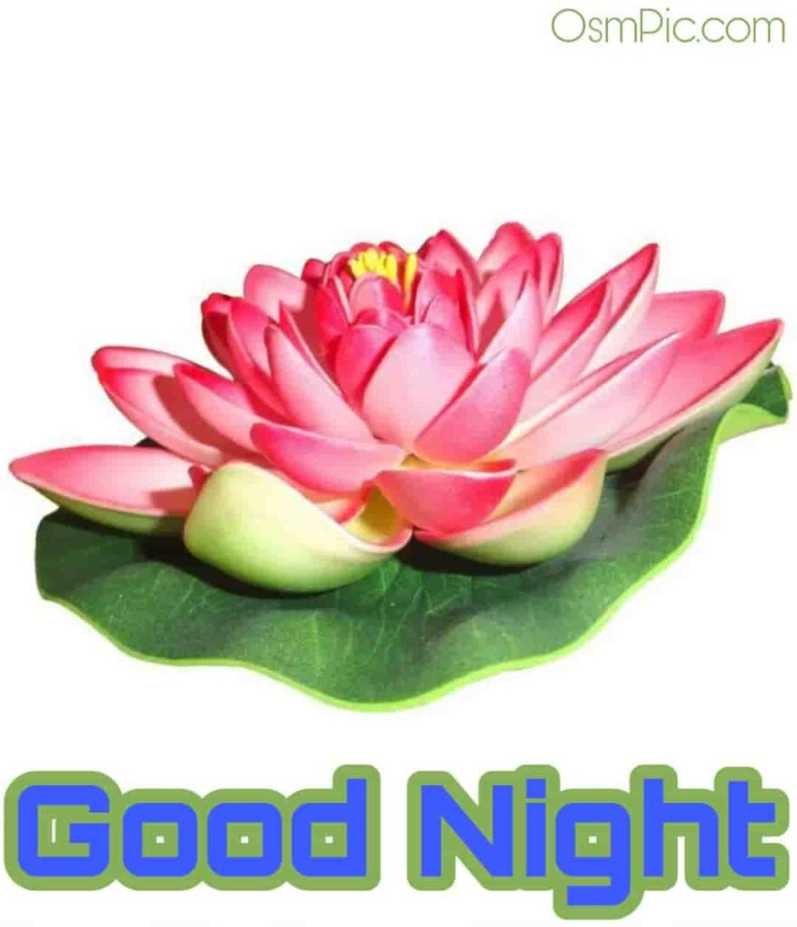 bjp good night images