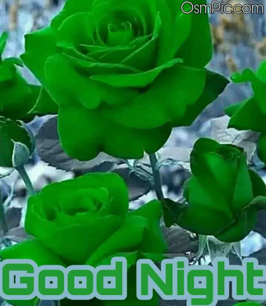 good night green rose images