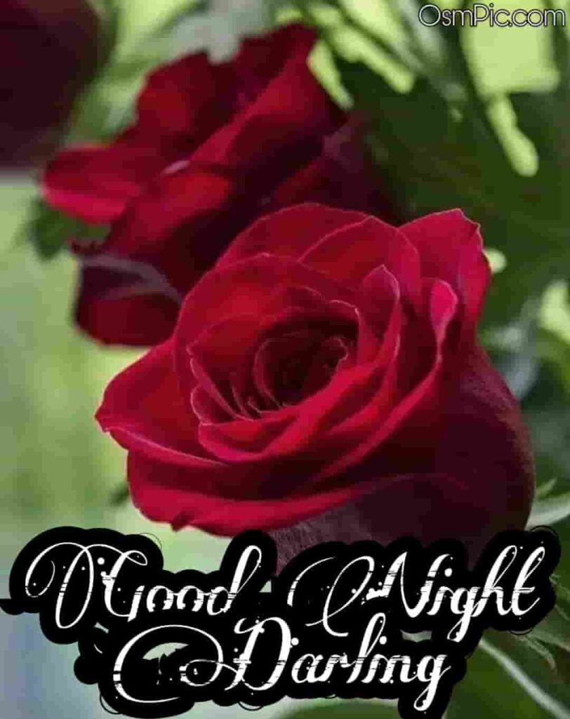 Good night red rose for darling