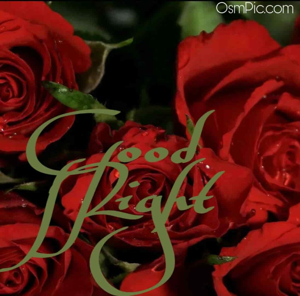 Good night red rose picture download