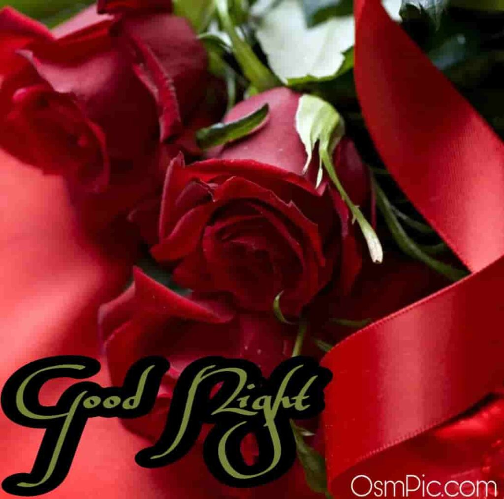 Most beautiful good night red roses