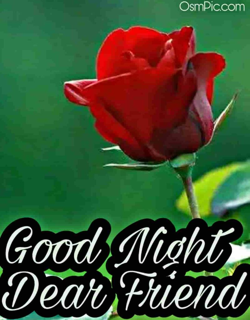 Good night red rose image for friend to wish happy rose day friend