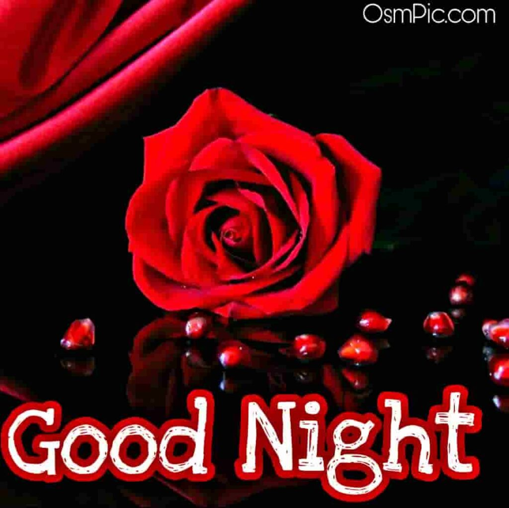 Romantic good night red rose