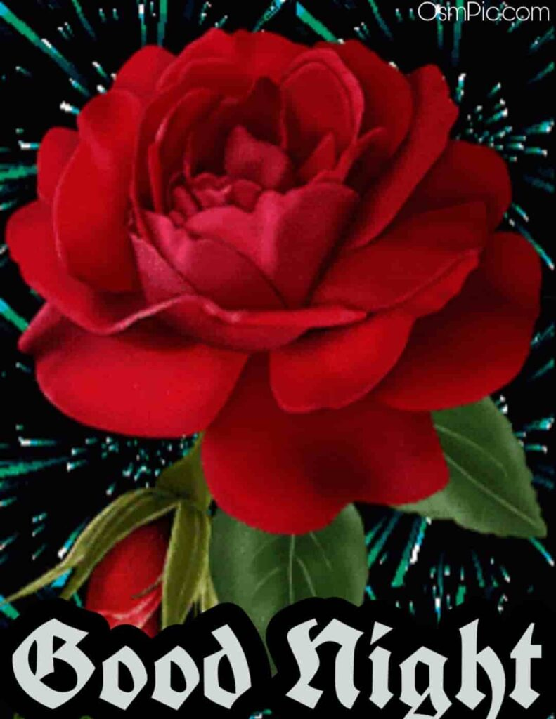 Very beautiful red rose good night image for girlfriend to wish happy rose day