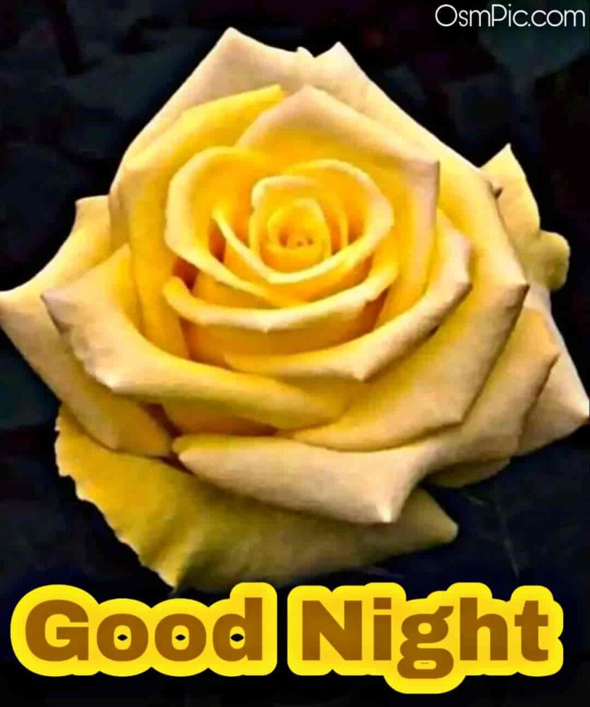 Yellow rose good night pic for rose day to wish a friend good night