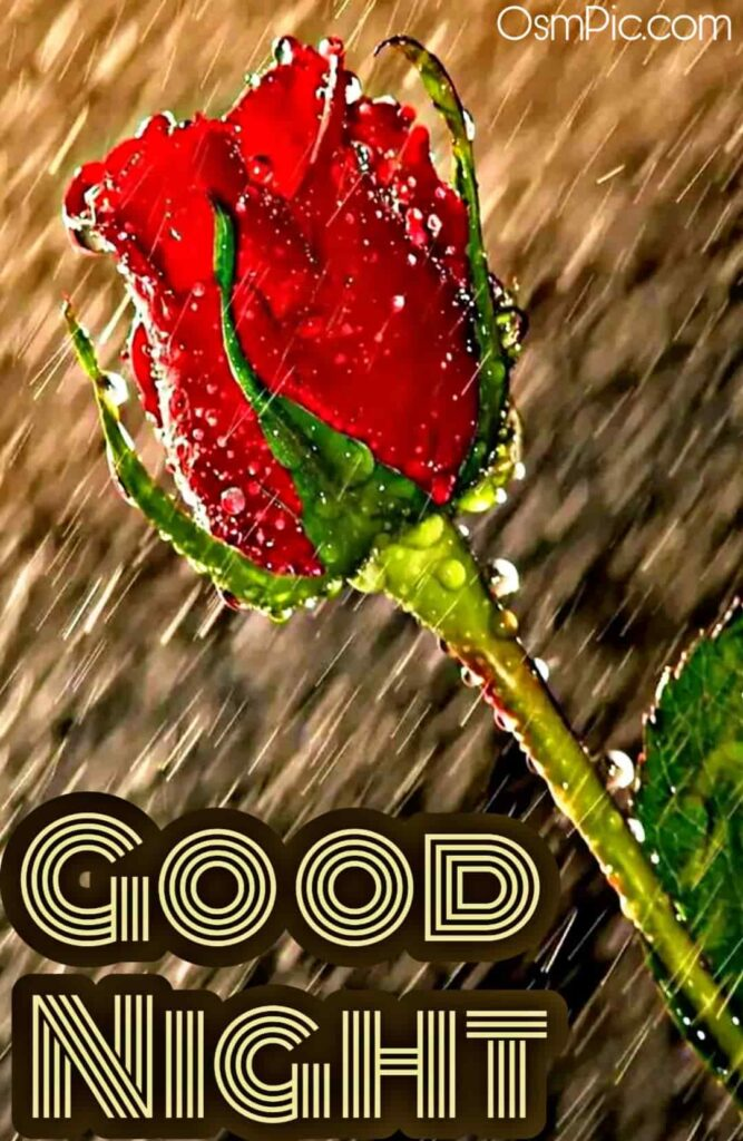 Special good night red rose image for rose day to wish someone special