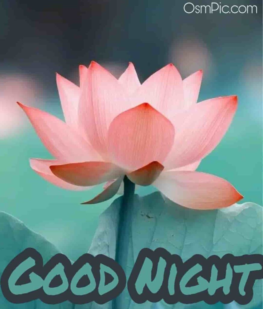 Good Night kamal ka phool