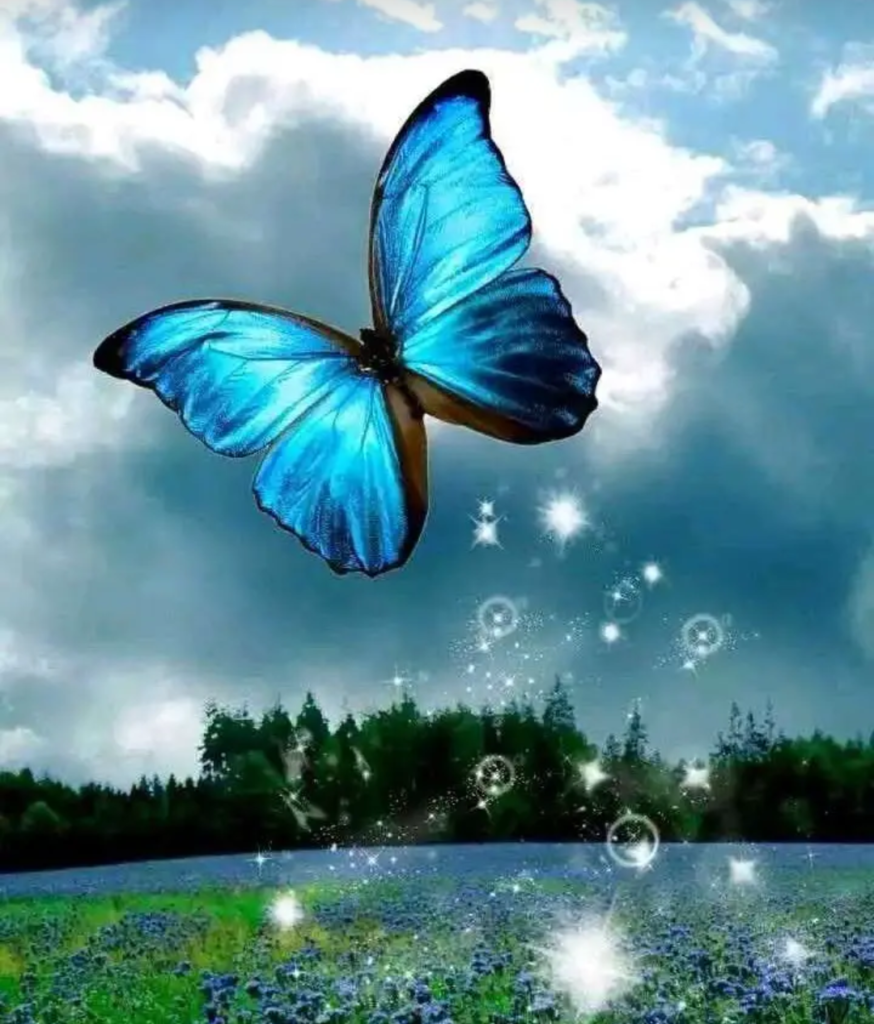 cool butterfly photos