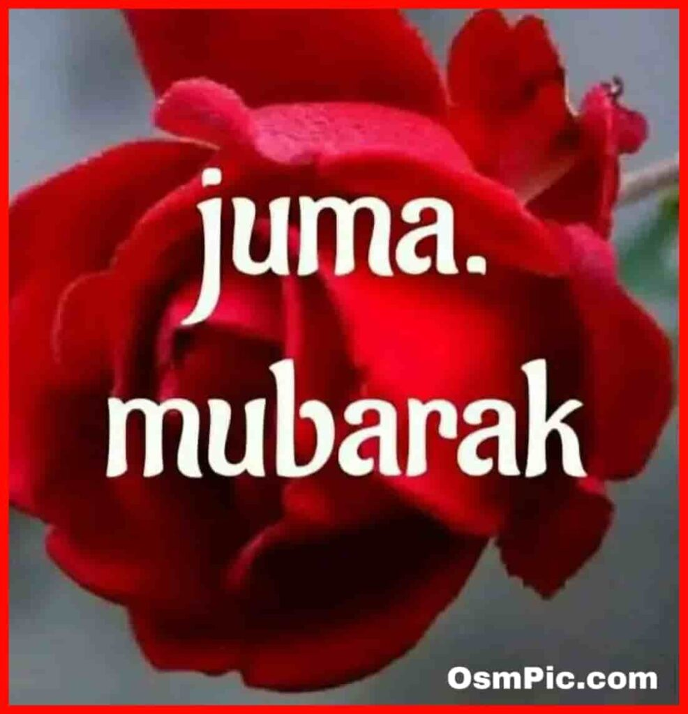 jumma mubarak red rose