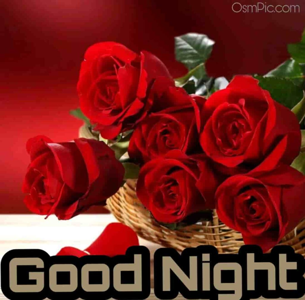 Awesome red good night roses