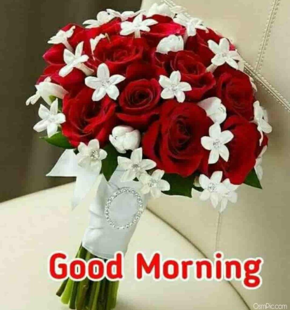 red rose bookey good morning