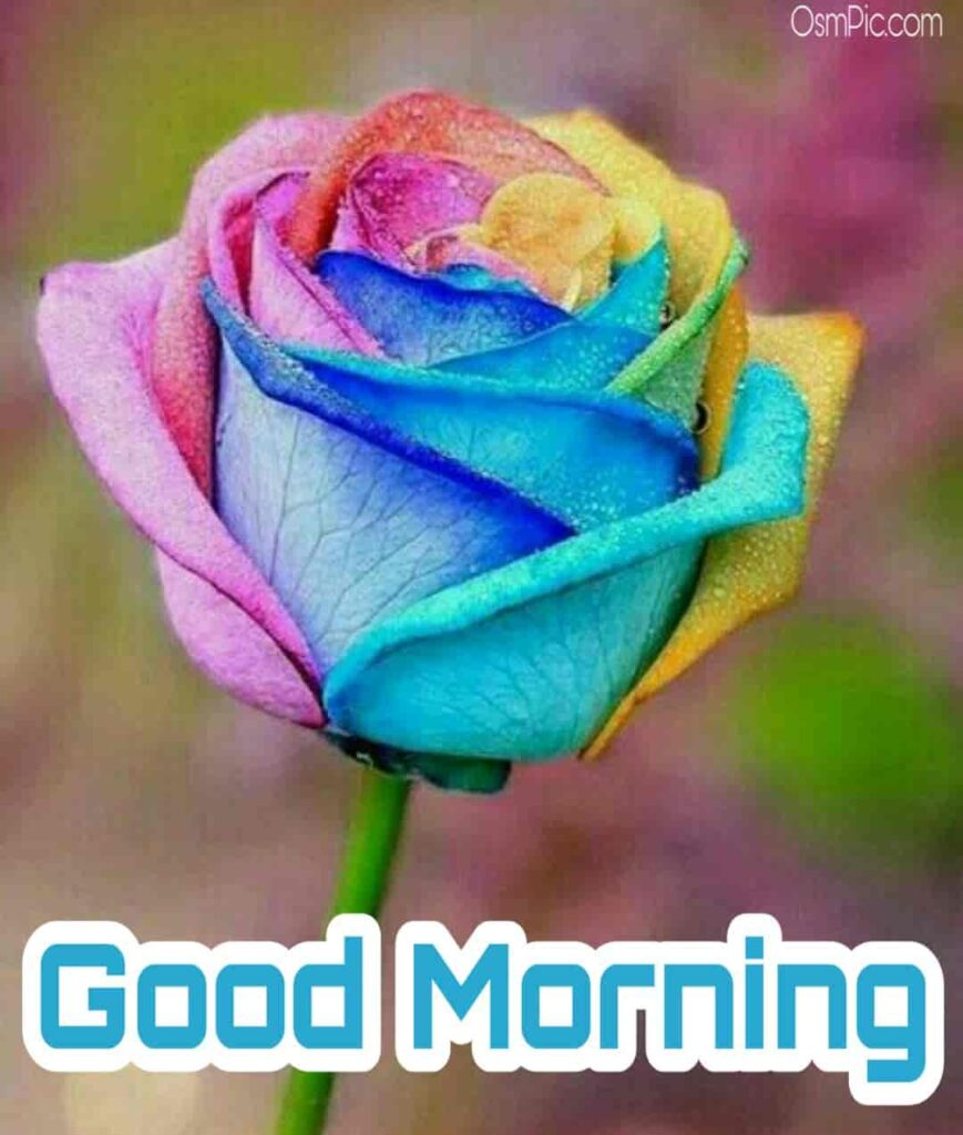 Awesome good morning rose flowers pic download for WhatsApp good morning message