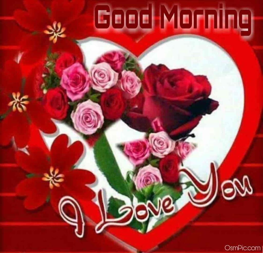Romantic good morning rose i love you image