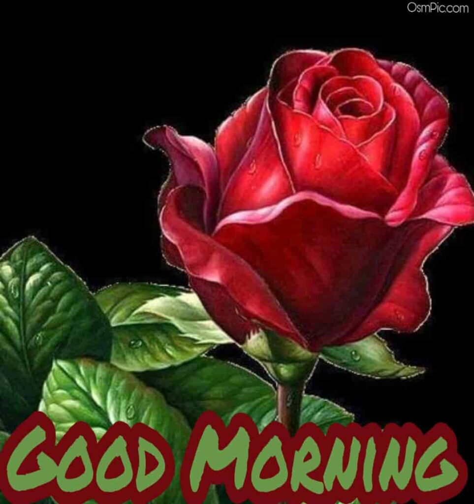 Download good morning images with rose flowers