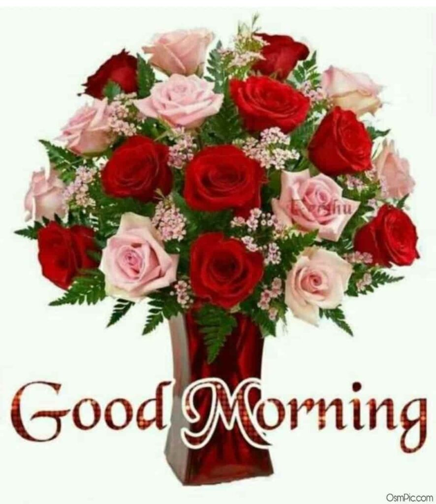 Roses good morning bookey image