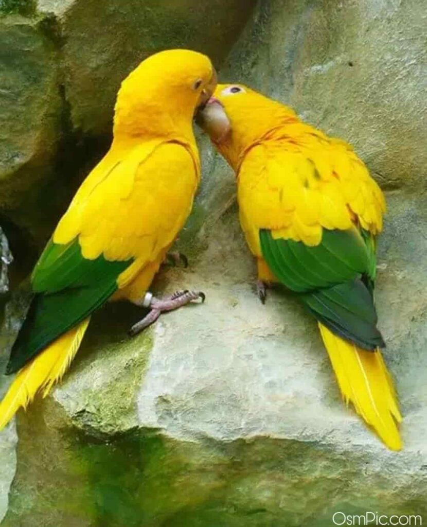 Lovely birds whatsapp dp