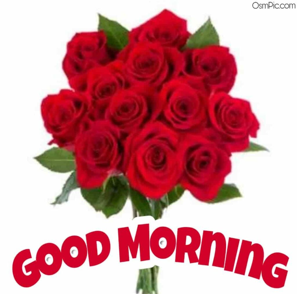 Beautiful Good morning roses