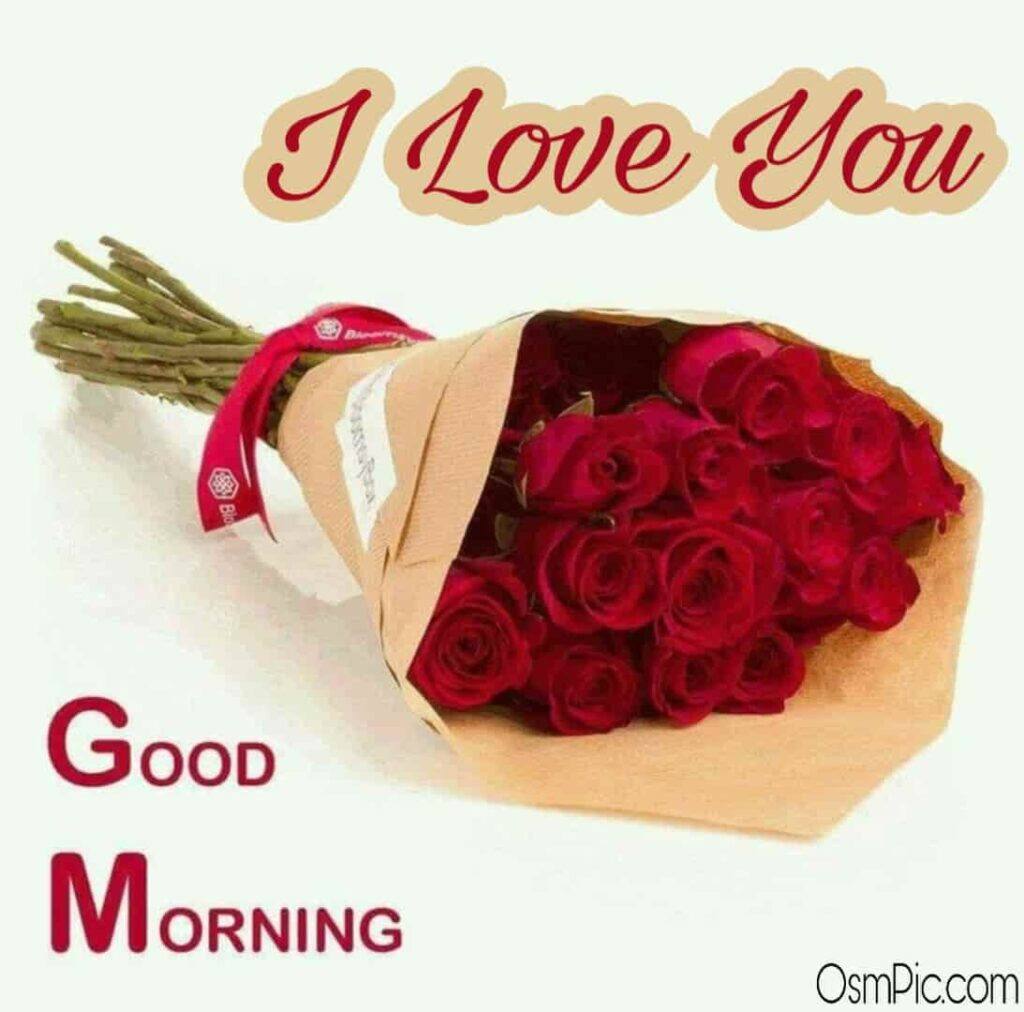 Beautiful good morning rose i love you image