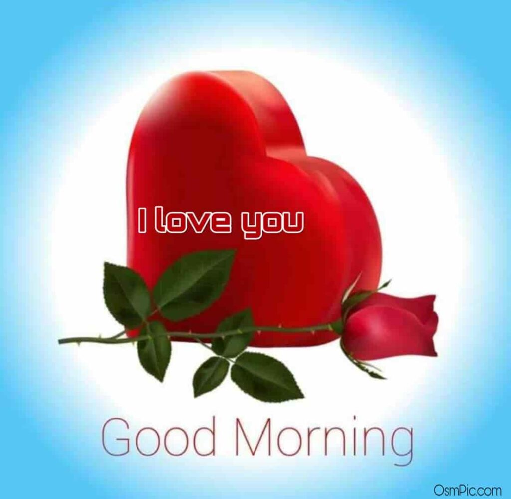 good morning rose I love you pic Download